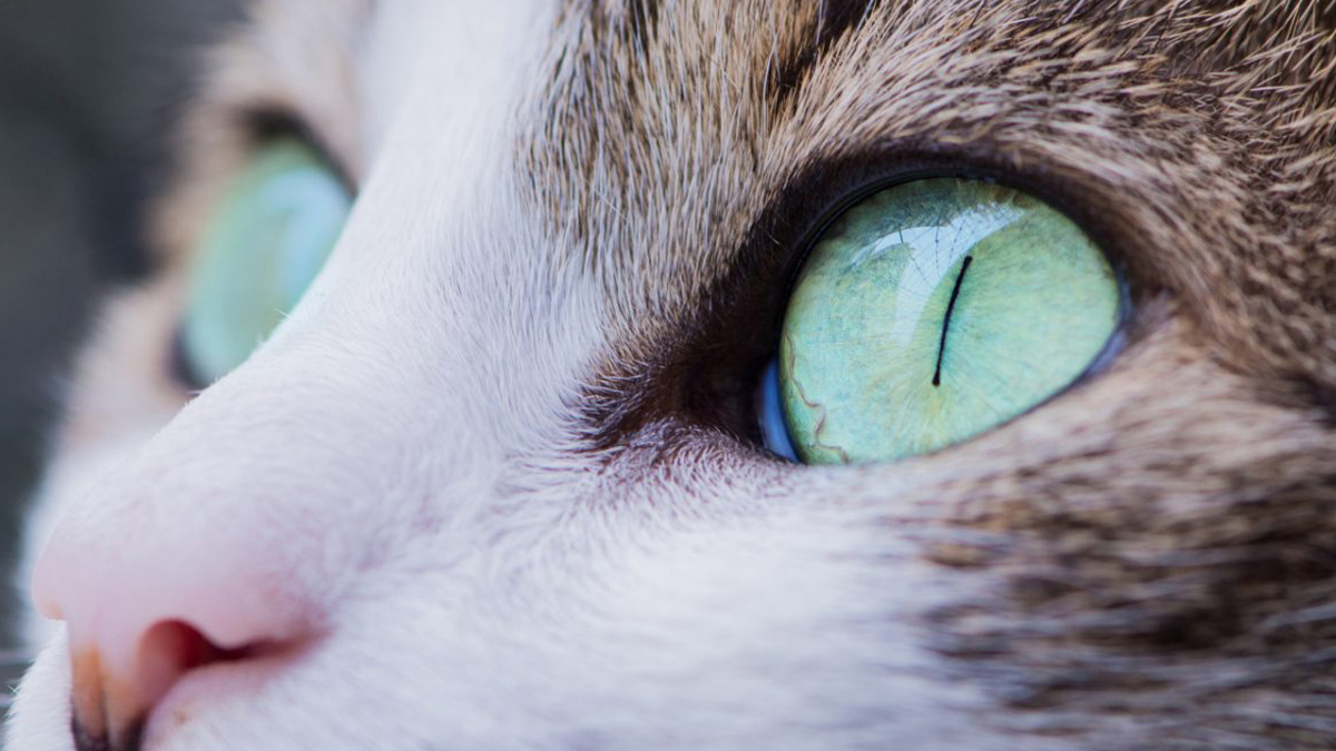 Banner image for blog post: Cat behaviour – What is your cat really thinking.