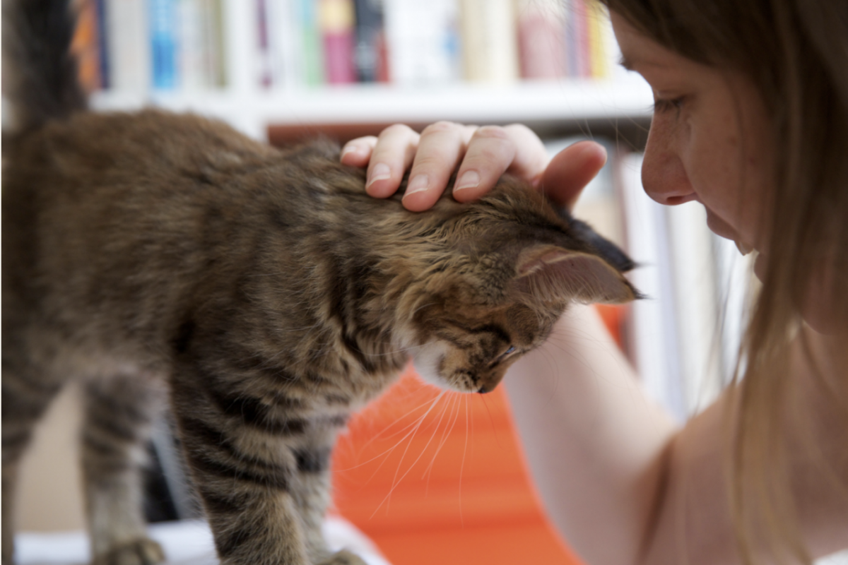 Banner image for blog post: How to Judge a Good Cat Sitter