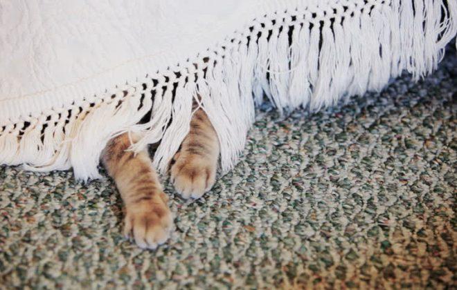 Katzenpfoten unter dem Bett