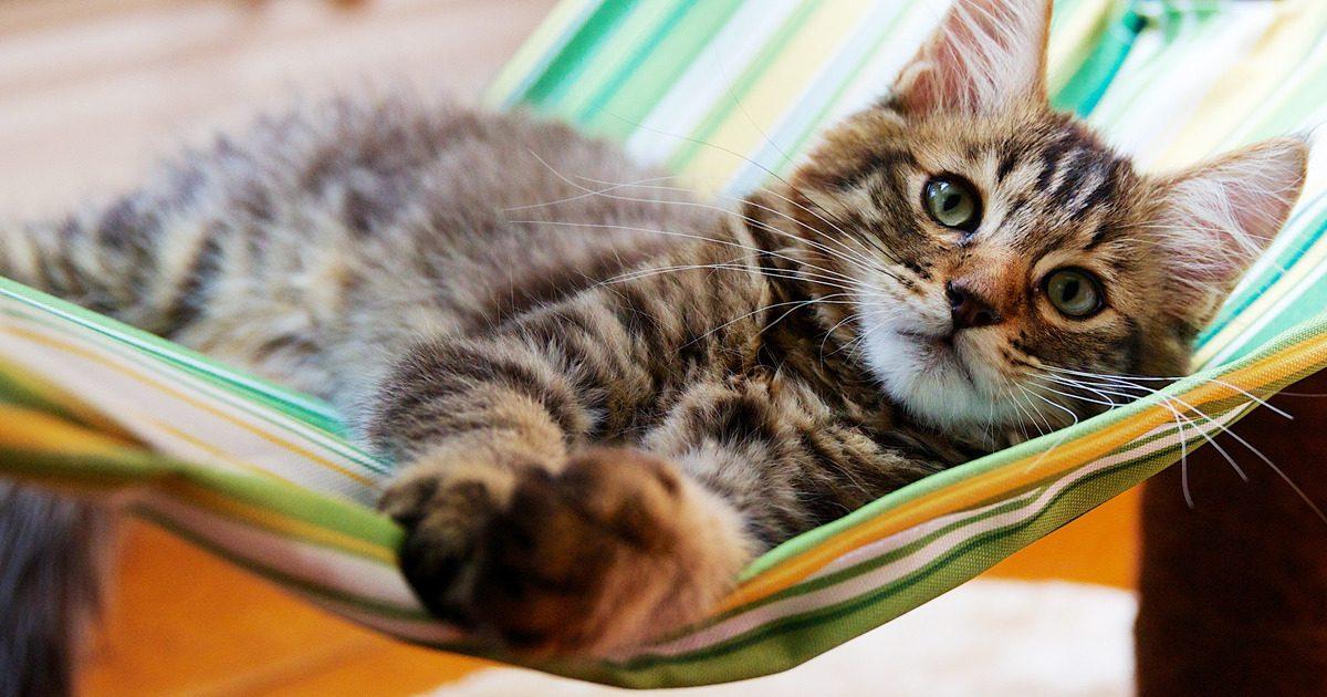 Ferienplanung mit Katze