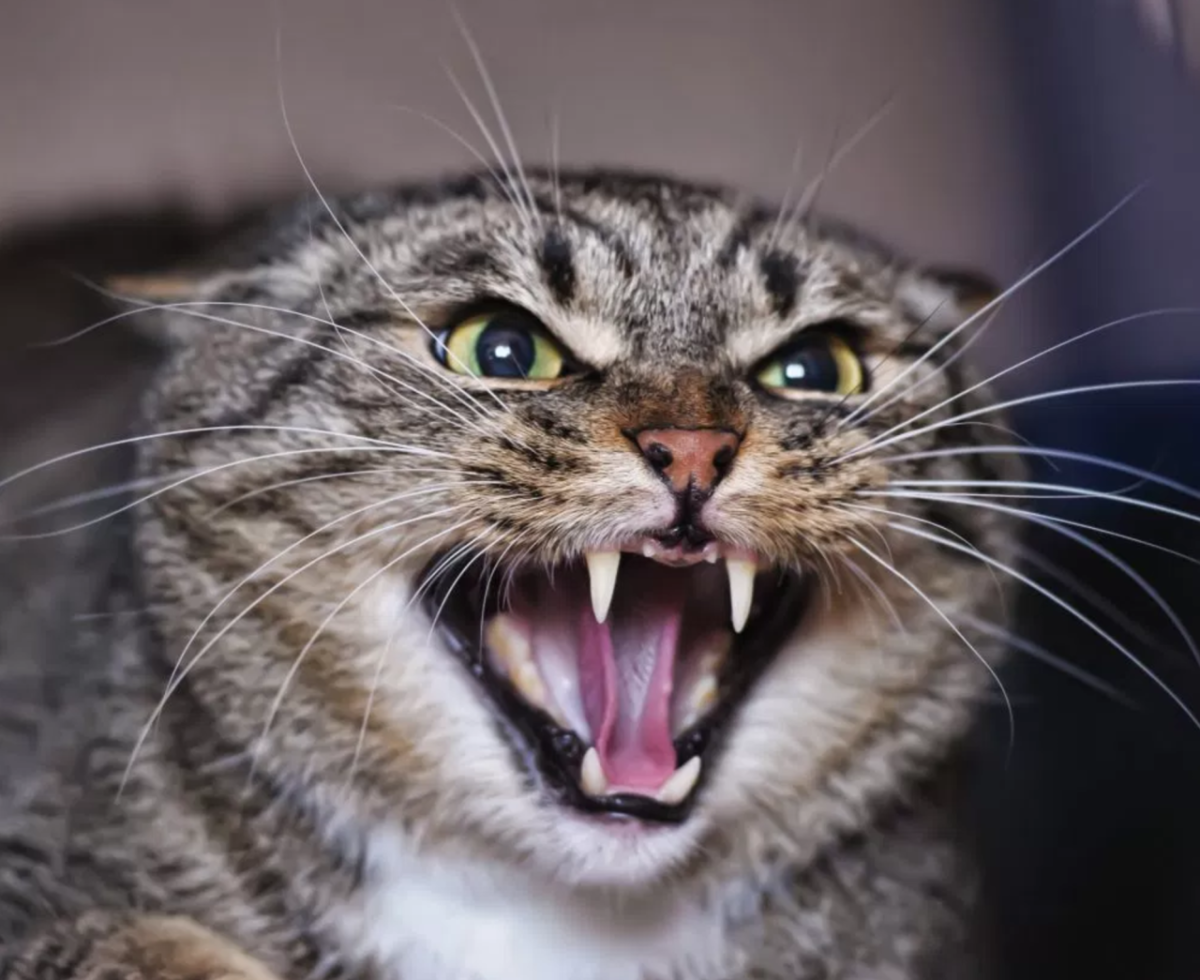 Banner image for blog post: 7 Tips on how to look after an aggressive cat
