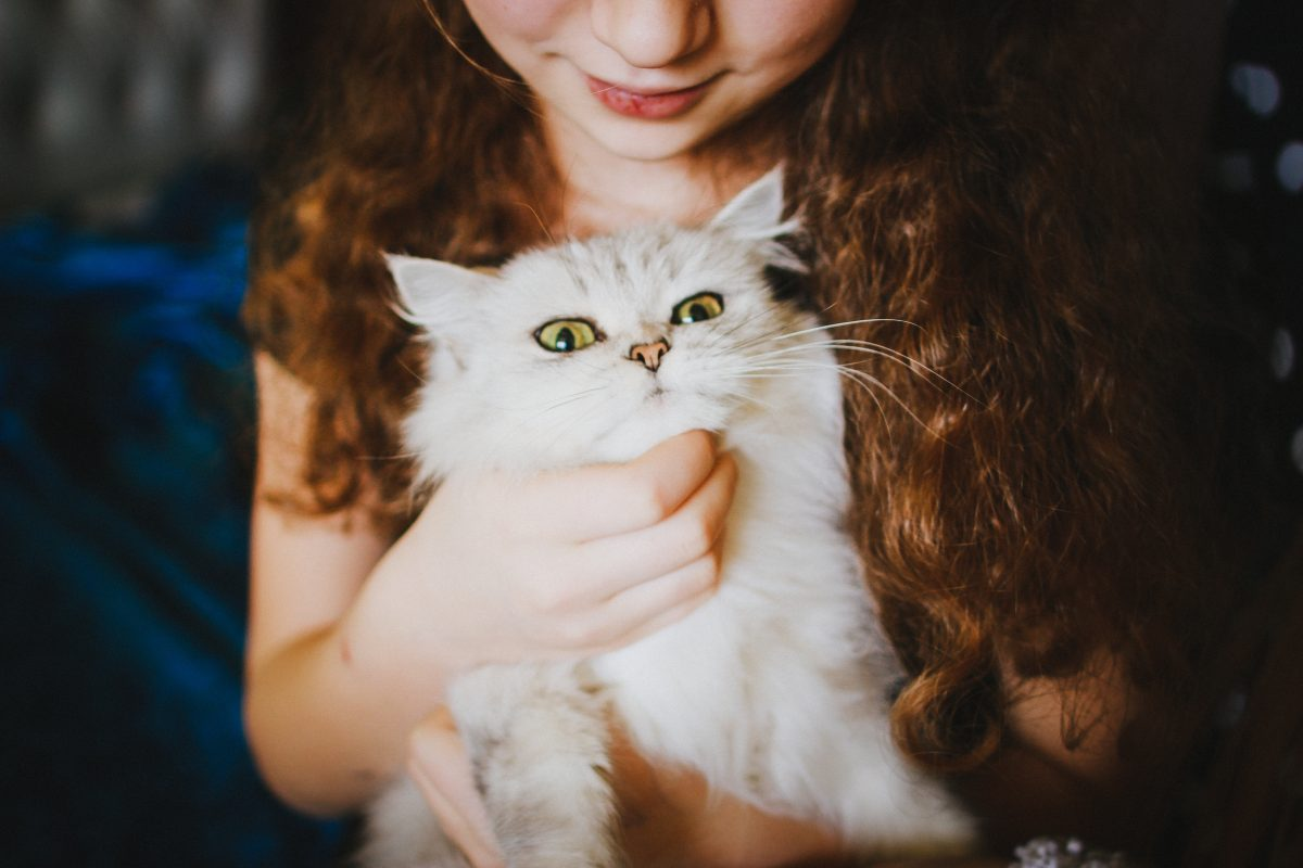 Banner image for blog post: Introducing cats to children.