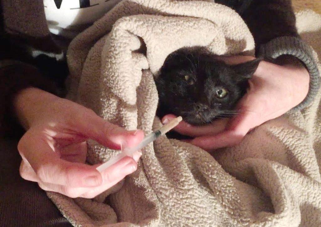 Syringe feed a cat