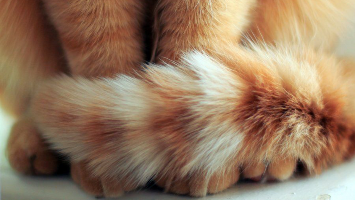 Banner image for blog post: What is my cat's tail telling me?