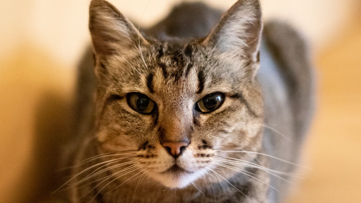 Banner image for blog post: A guide to a cat's facial expressions