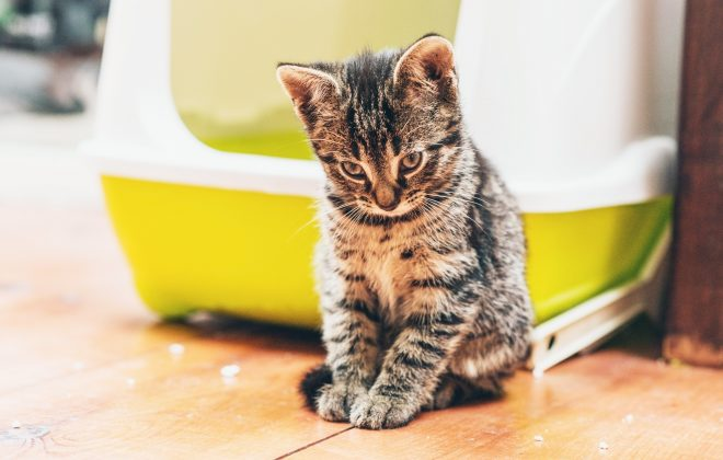 How cat owners can deal with litter tray upsets