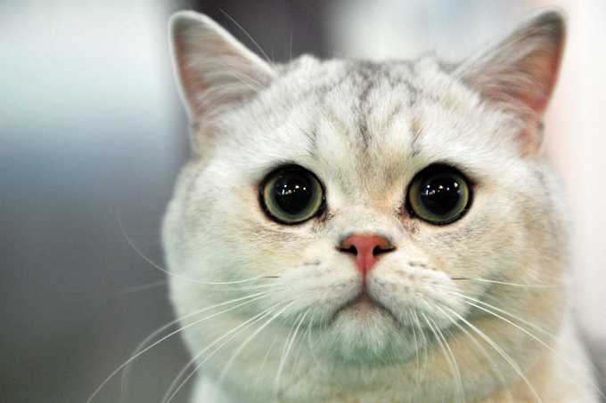 Banner image for blog post: Cat breeds for different lifestyles