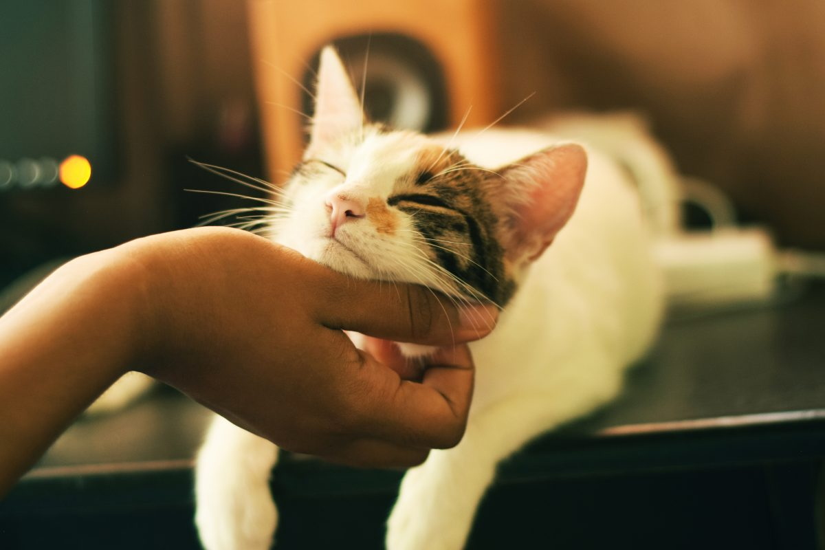 Banner image for blog post: Cat Sitting – Holiday Cat Care in Familiar Surroundings