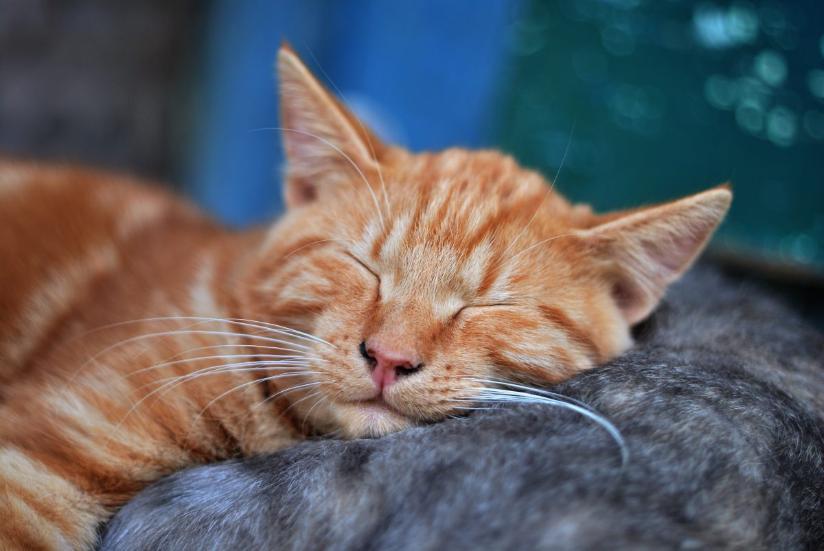 Banner image for blog post: Why do cats sleep so much?
