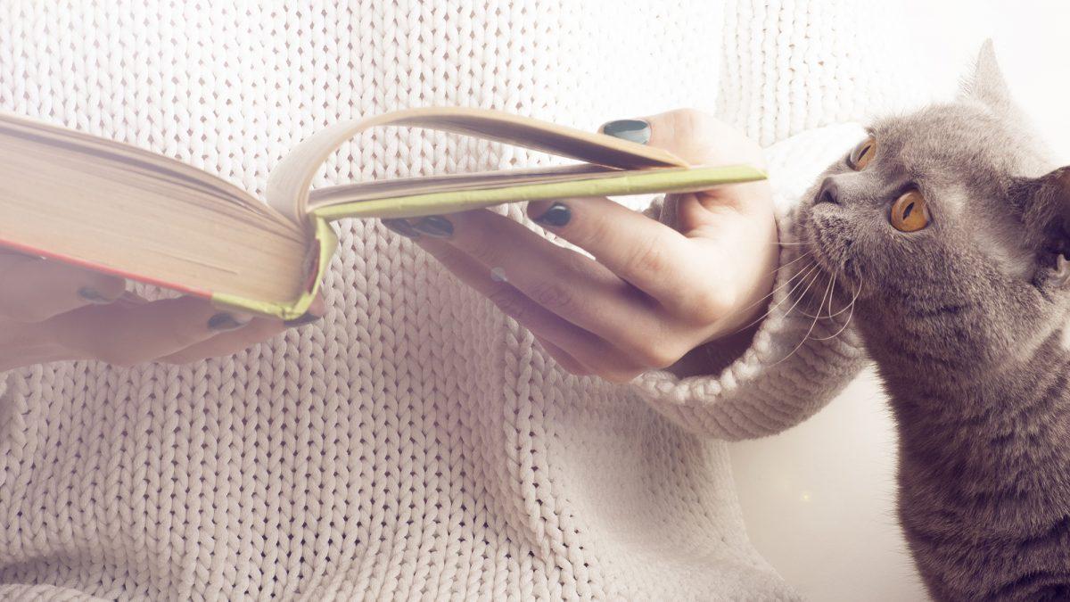 Die besten Katzenbücher!