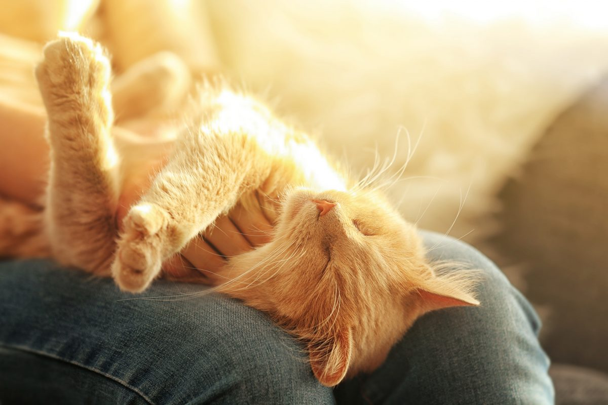 Banner image for blog post: How and why do cats purr?