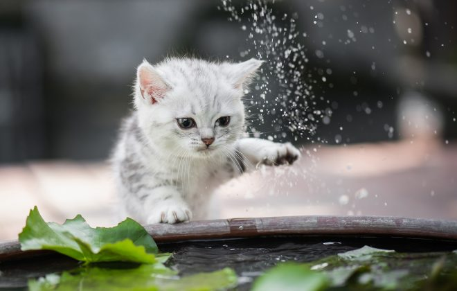 Why don't cats like water