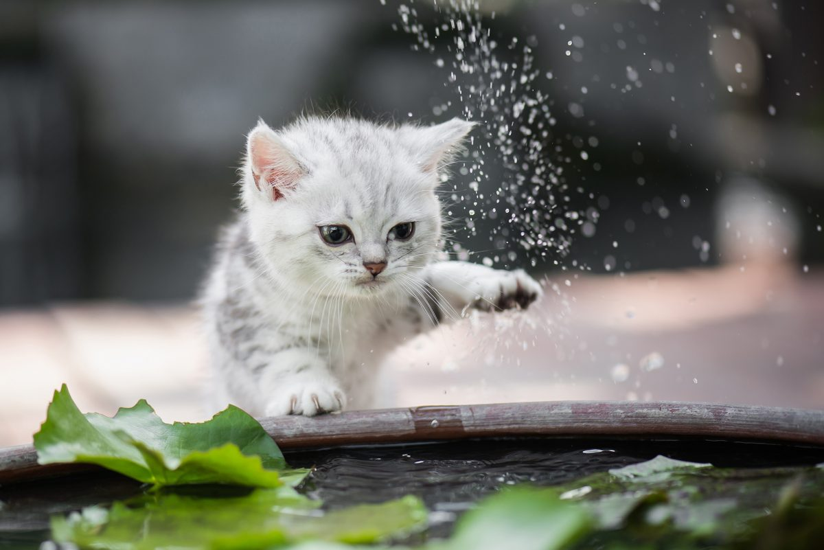 Banner image for blog post: Why don't cats like water?