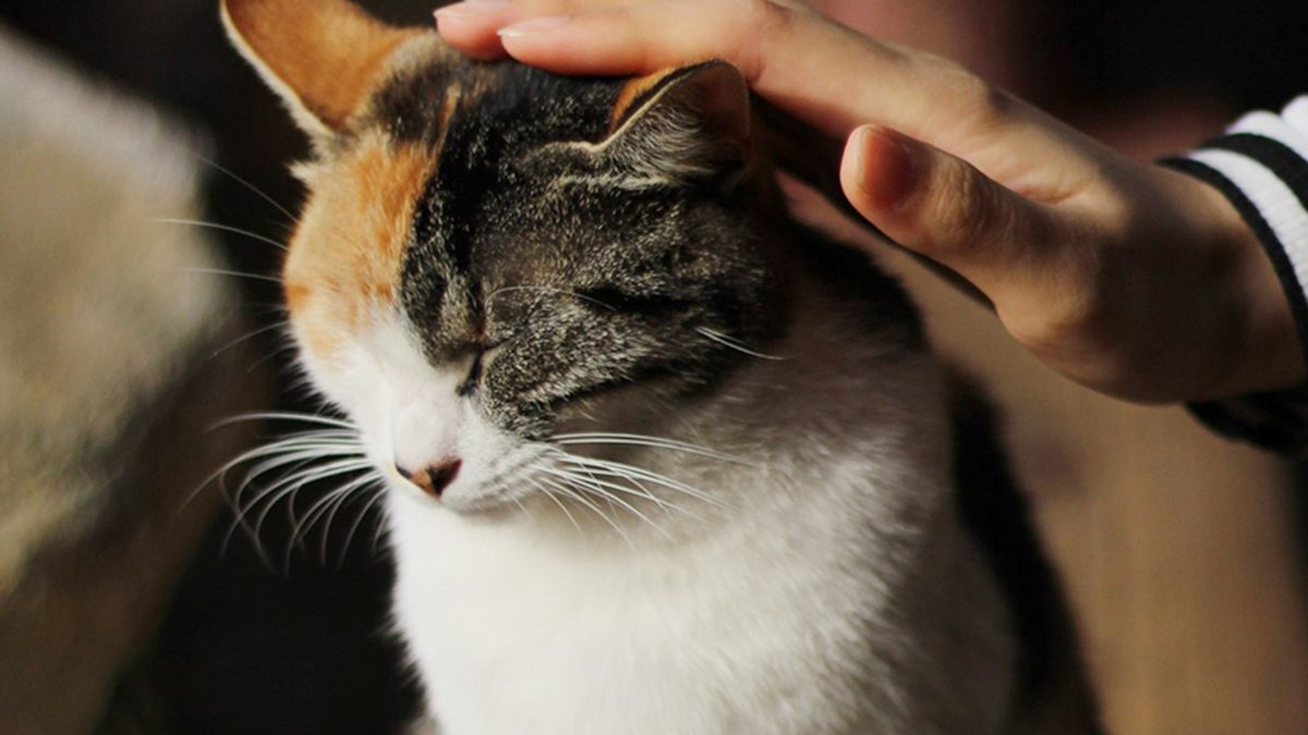 Banner image for blog post: What to look out for when choosing a cat sitter.