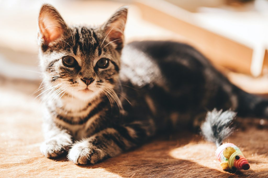 Prepare cat care well in advance of going away