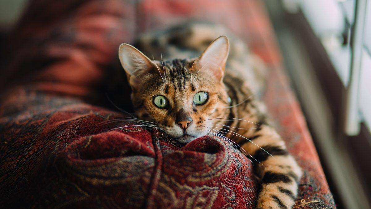 Celebrate International Cat Day with these facts from Cat in a Flat