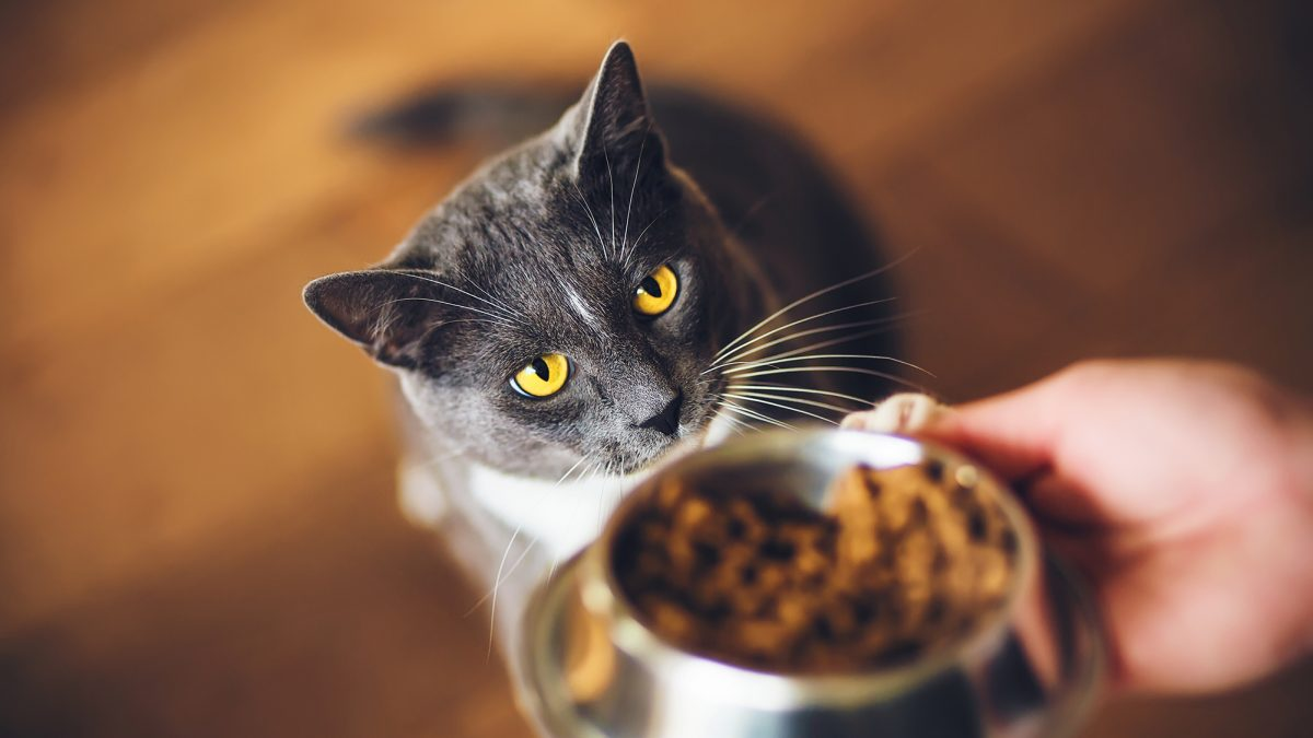 Cat in a Flat's guide to the top ten reasons to hire a cat sitter