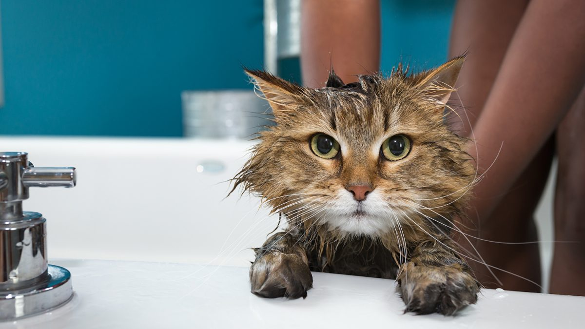 Should you give your cat a bath