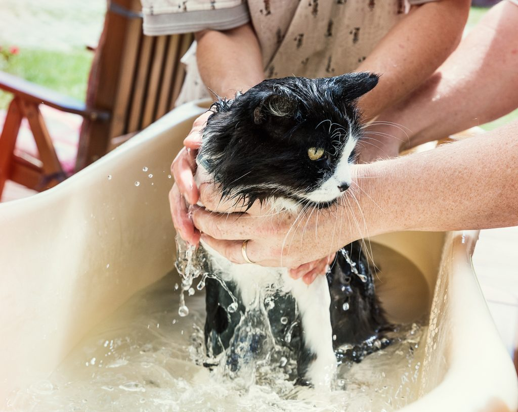 An extra pair of hands can be helpful if you have to bath your cat