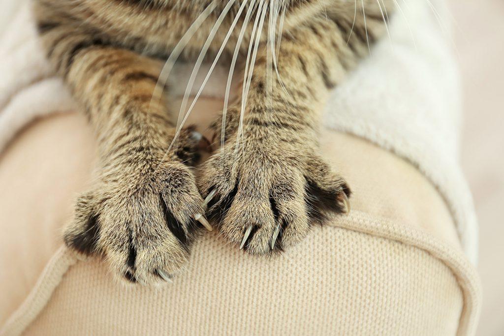 Unfortunately, many cats enjoy scratching furniture