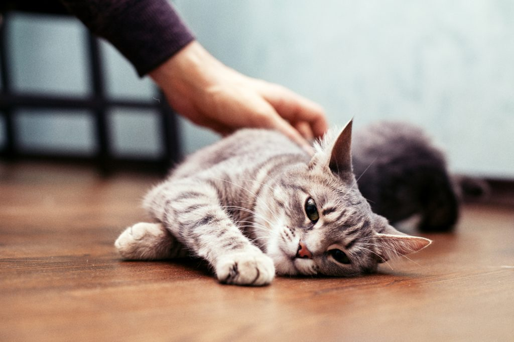Hire a cat sitter to make sure your kitty gets enough care and attention