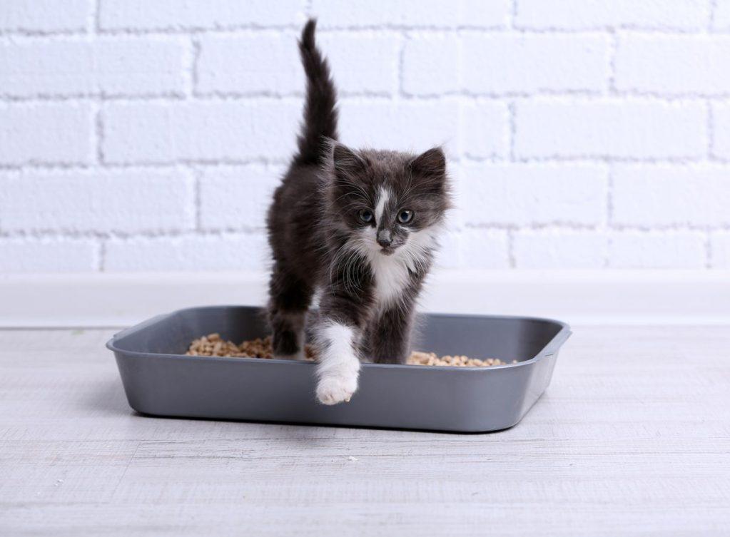 Das beste Katzenstreu für Deine Katze