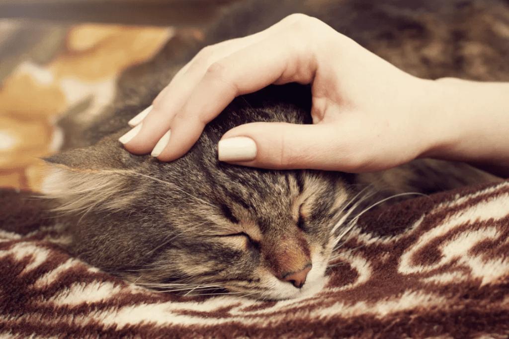 Engager un chat sitter, c'est tendresse et câlins garantis pour votre minou.