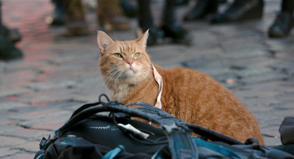 Katzen-Filme: Bob der Streuner