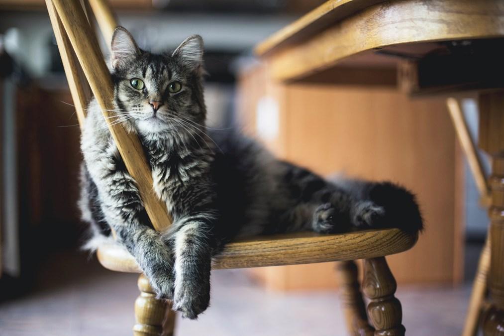 Katze liegt auf einem Stuhl in einer Katzenpension
