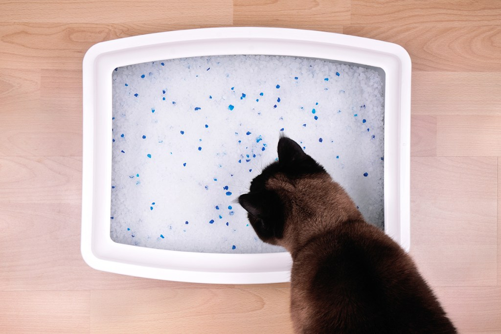 Katze am Katzenklo mit Silikatstreu