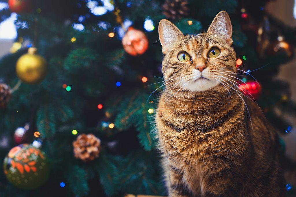 Bannerbild für Blogbeitrag: Weihnachten mit Katzen: Darauf solltest Du achten!