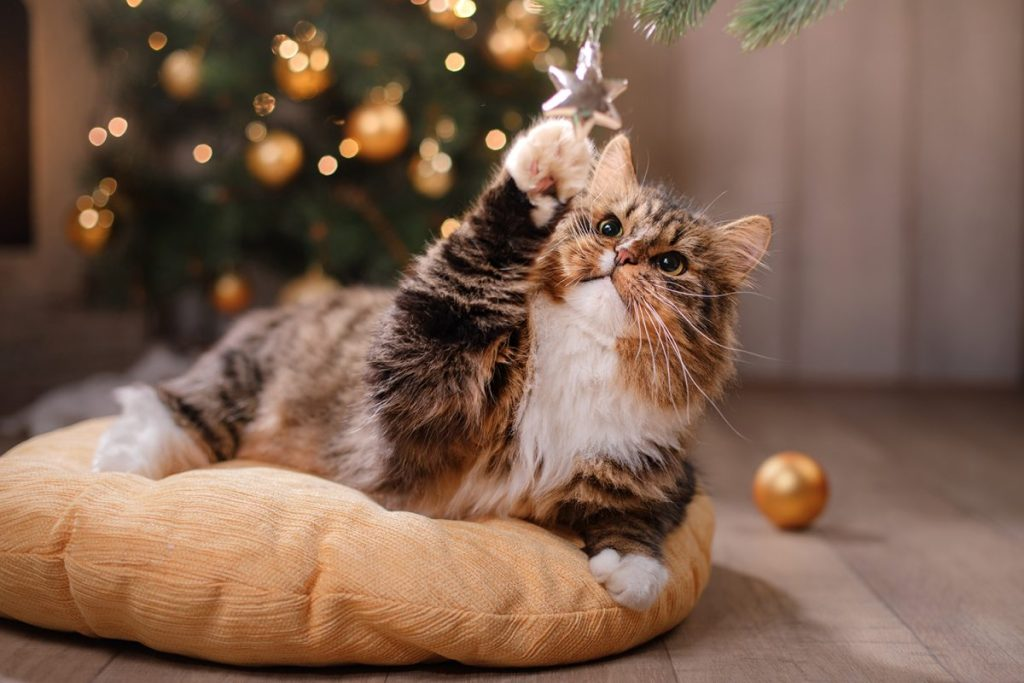 Choose ornaments that your cat won't be able to break