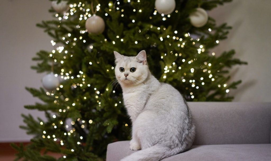 Be careful to supervise your cat around the Christmas tree