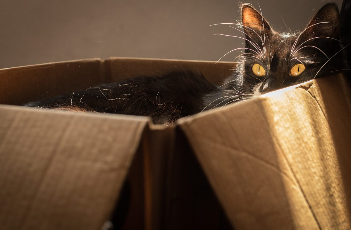 Banner image for blog post: If I fits, I sits: why do cats love boxes?