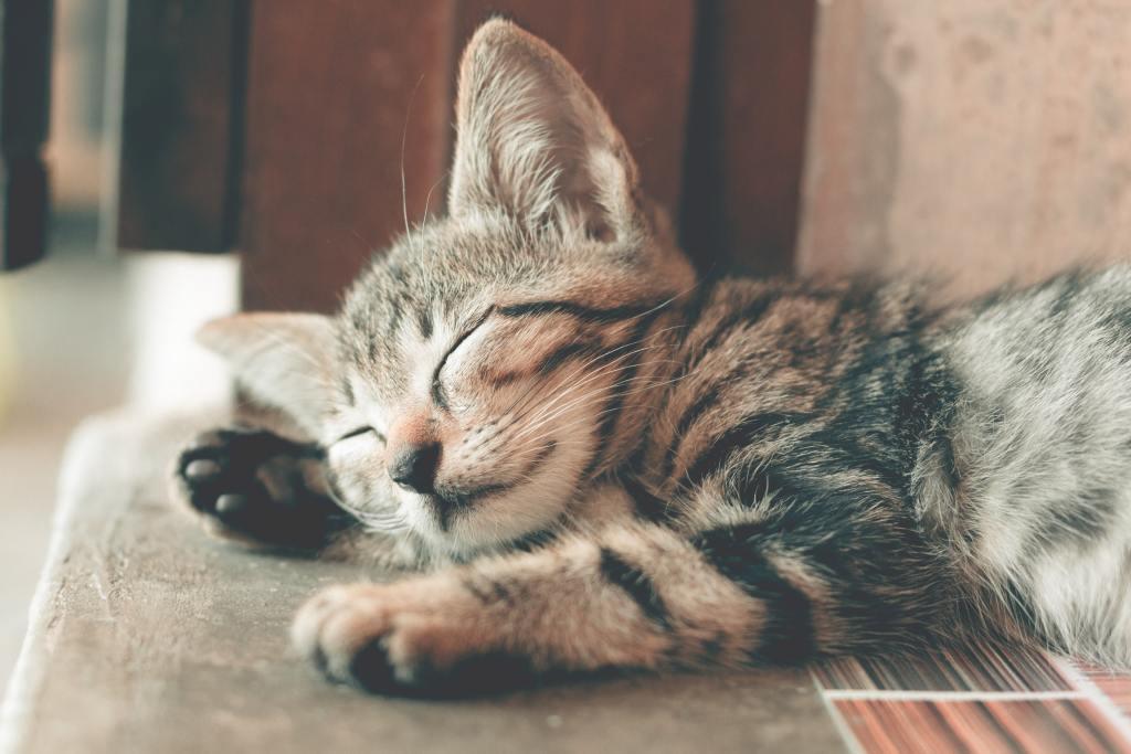 Eine Katze zu adoptieren ändert das Leben!