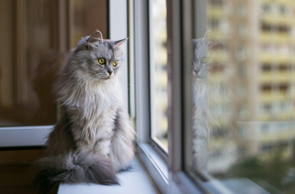 Bannerbild für Blogbeitrag: Welche Katzen-Rassen eignen sich für die Wohnungshaltung?