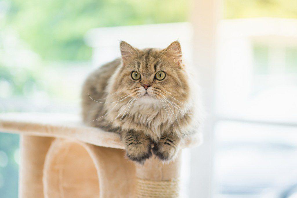 Katze in Wohnung