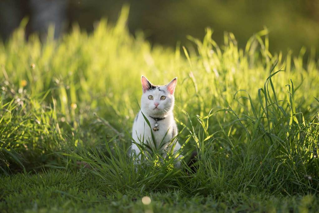 Some studies show a bell collar can help prevent cats attacking wildlife