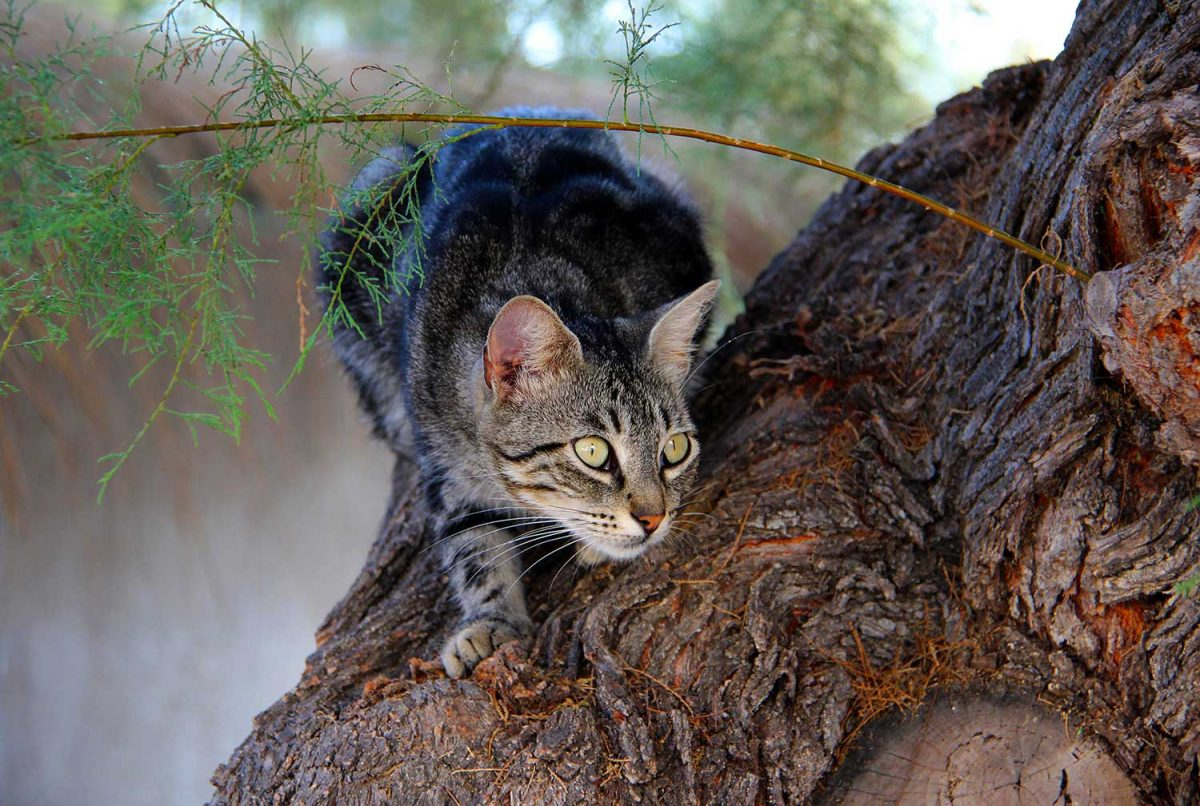 Banner image for blog post: How do I stop my cat from attacking wildlife?