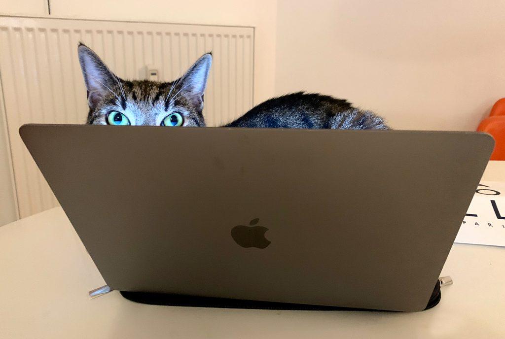Bannerbild für Blogbeitrag: Zurück im Büro? So gehst Du mit der Trennungsangst Deiner Katze am besten um!
