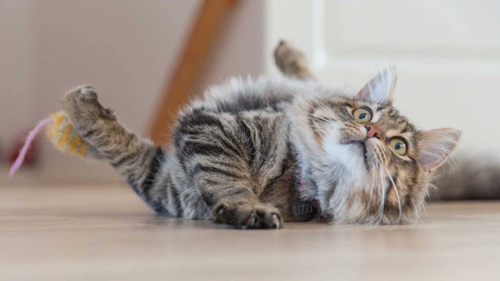 Playing with your cat regularly can reduce the likelihood that they attack wildlife