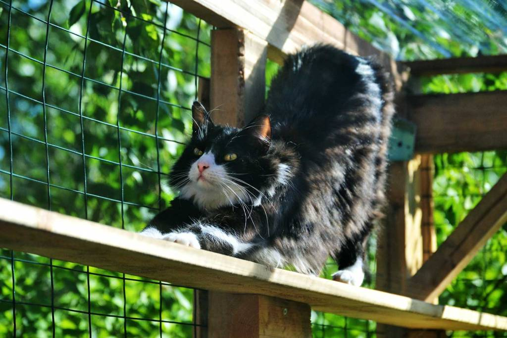 Providing your cat with controlled outdoor access with prevent them attacking wildlife