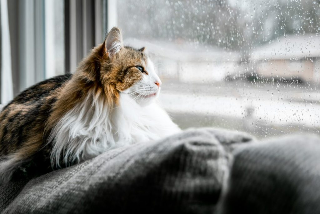 Cats can suffer from separation anxiety when left alone
