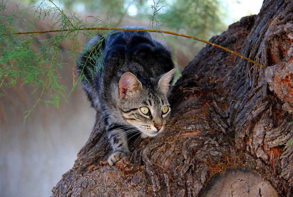Bannerbild für Blogbeitrag: Kann ich meiner Katze den Jagdtrieb abgewöhnen?
