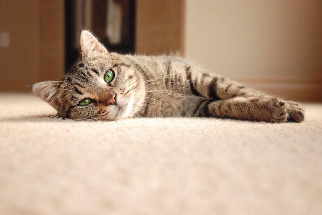Keep your cat happy with these tips