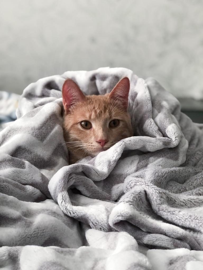 Katze ist eingehüllt in Decken.