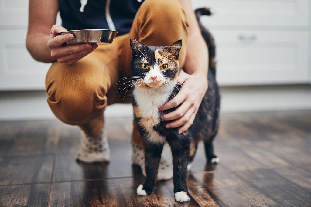 Katzen-Sitter behalten gewohnte Routinen Deiner Katze bei.