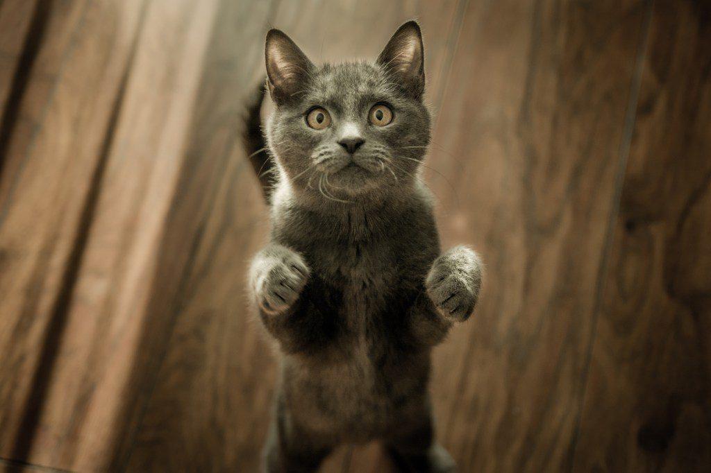 Katzen-Sitter verbringen viel Zeit damit, mit Deiner Katze zu spielen.