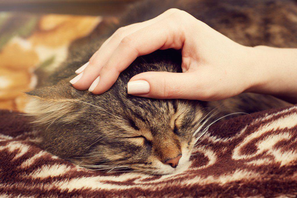 Streicheleinheiten kommen beim Katzen-SItting nicht zu kurz.