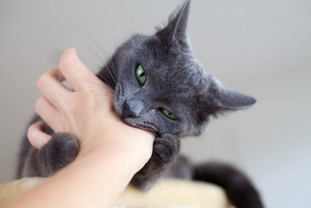 Warum beißt Deine Katze
